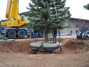 Tree services in Durango